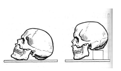 Постановка черепа для лепки
